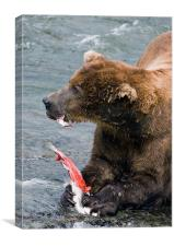 Large Bear eating Salmon on Brooks Falls, Canvas Print
