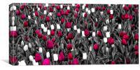 chosen tulips, Canvas Print