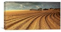 Spud field., Canvas Print