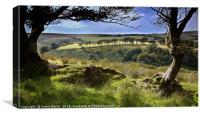 Exmoor tree view, Canvas Print