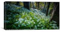 Wild garlic woods, Canvas Print