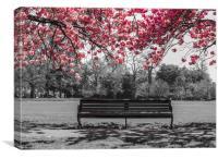Cherry Blossom , Canvas Print