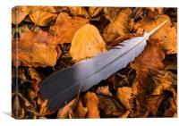 Autumn feather, Canvas Print