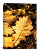 Oak leaf on forest floor, Canvas Print