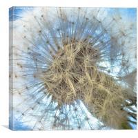 Dandelion clock, Canvas Print