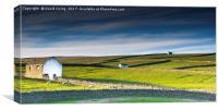 Sheep farming in Teesdale, Canvas Print