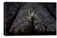 Moonlit Trees, Canvas Print