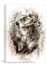 Meerkat , Canvas Print