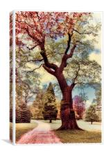Dreamy Woods, Canvas Print