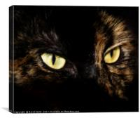 On The Prowl, Canvas Print
