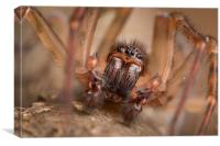 British Spider, Canvas Print