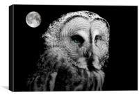 Night Owl, Canvas Print
