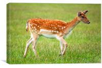 Deer , Canvas Print