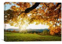 Autumn Sun on Dappled Fields, Canvas Print