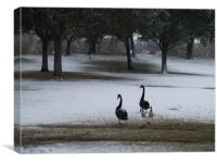Ducklings out for a walk in the Park, Canvas Print