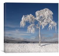 I'm Cold- Brrrrr., Canvas Print