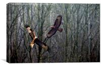 Red Kite & Buzzard , Canvas Print