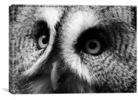Great Grey Owl, Canvas Print