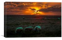 Elmley Sunrise, Canvas Print