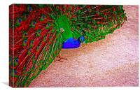 beautiful peacock displaying, Canvas Print