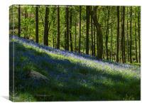 Stonethwaite Bluebells, Canvas Print