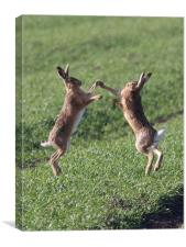 High Fiving Hares, Canvas Print