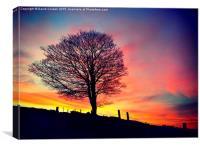 Splendid Tree at Sunset, Canvas Print