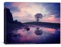 King hill tree after the rain, Canvas Print