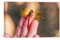 Hug of dragonfly, Canvas Print