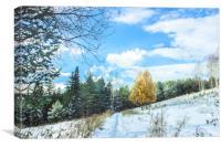 Late autumn landscape with larch, Canvas Print