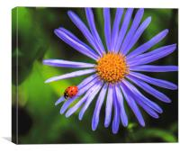 The runway of a ladybird, Canvas Print