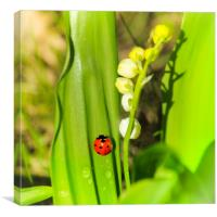 The Ladybird and Lily of the valley