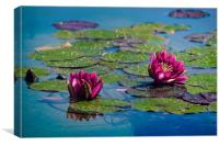 Two water lilies, Canvas Print