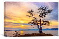 Baikal pine, Canvas Print