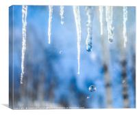 Icicles with drops in a birch grove, Canvas Print