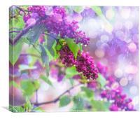 Spring rain, Canvas Print
