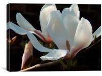 Spring Pure Delight, Canvas Print