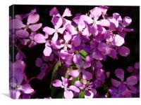 Violet Surprise!, Canvas Print