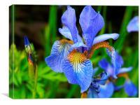 Iris Sky Blue Summer, Canvas Print