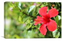 Red Hibiscus Flower, Canvas Print