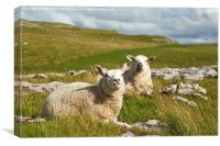 Malham sheep , Canvas Print