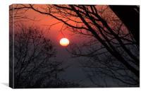 Sunrise among tree, Canvas Print