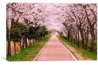Blossom Cherry Path, Canvas Print