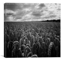 Maize Field, Canvas Print