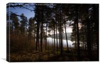 Through Langsett Woods, Canvas Print