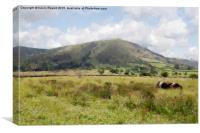 Broadlee Bank Tor, Canvas Print