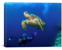 Underwater turtle and photographer, Canvas Print