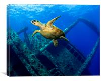 Egypt underwater Giannis D Gianis D turtle , Canvas Print