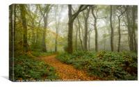 Woodland Path, Canvas Print