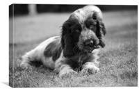 Puppy in the garden, Canvas Print